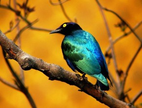 Beautiful_Hd_Bird_Wallpaper_1680x1050_44