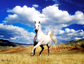 White_Horse_and_Awesome_Clouds_HD_Wallpaper-Vvallpaper.Net