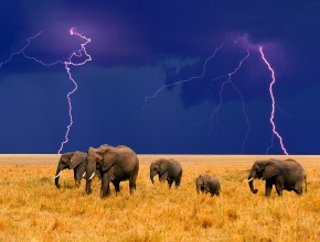 elephant-wallpaper-family